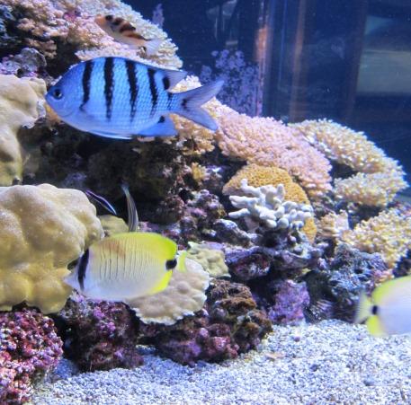 fish_aquarium