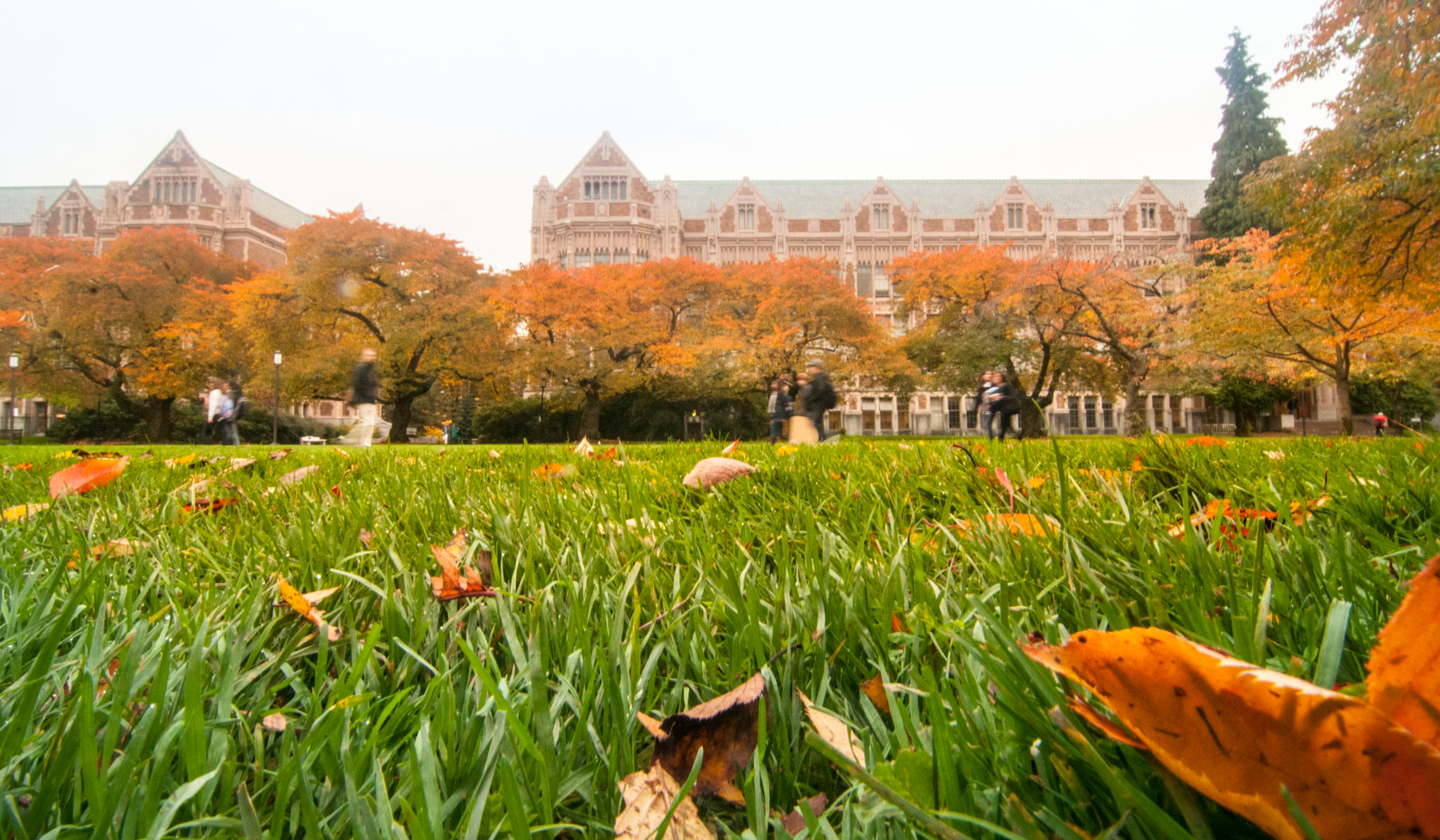 fall in the Quad